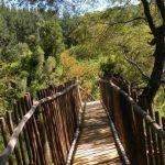 Arriendo de autos en Talca - Chile - Reserva Nacional Los Ruiles