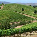 Arriendo de autos en Talca - Ruta del Vino Valle del Maule
