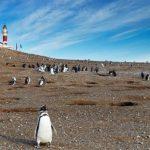 Rent a Car en Punta Arenas de Chile - Pingüineras