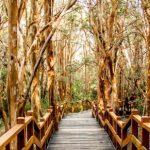 El bosque de Arrayanes Bariloche